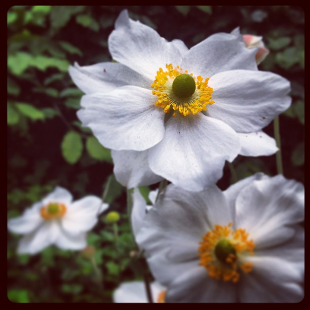 white flowers - 02