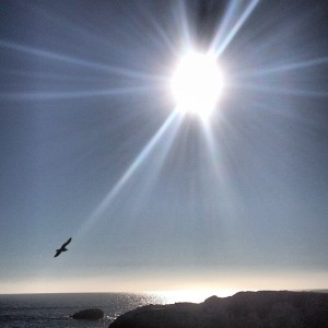 sun and seagull